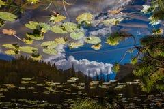 Пруд лилии в национальном парке скалистой горы Стоковое Изображение