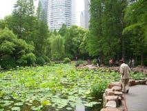 Пруд лилии Шанхая Стоковое Изображение RF