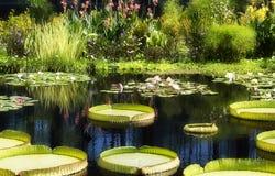 пруд лилии Стоковые Фотографии RF