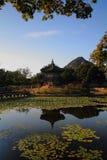 пруд лилии gyeongbokgung замока стоковое изображение