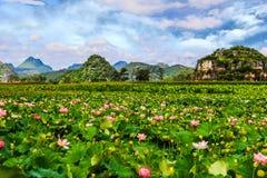 Пруд лотоса Китая Юньнань PuZheHei стоковое фото
