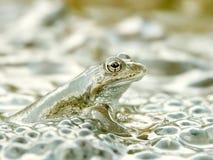 пруд лягушки пущи Стоковое Фото