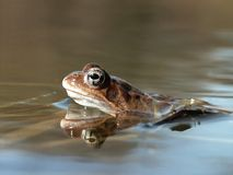 пруд лягушки пущи Стоковое Изображение RF