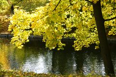 пруд осени Стоковое Изображение RF