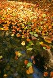 пруд осени Стоковое Изображение