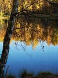 пруд осени стоковое фото rf