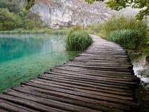 пруд парка рыб Стоковое Фото