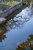 Пруд разветвляет отражение Стоковое Фото