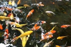 пруд рыб Стоковые Фото