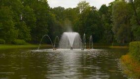Пруд с фонтаном среди деревьев сток-видео