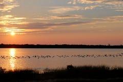 пруд утки стоковое фото
