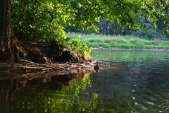 пруд утки Стоковые Изображения