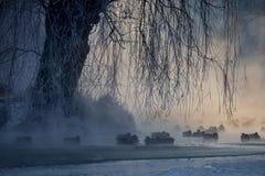 пруд уток Стоковые Фото