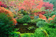 пруд японца сада Стоковая Фотография