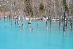 Пруд Biei Shirogane голубой стоковая фотография rf
