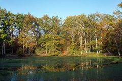 Пруд Evées конематки вспомогательный в лесе Фонтенбло Стоковые Фото