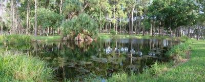 пруд florida Стоковые Фото