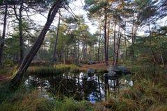 Пруд Froideau в лесе Фонтенбло стоковые изображения