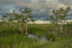 Пруд Paurotis внутри национального парка болотистых низменностей стоковые фото