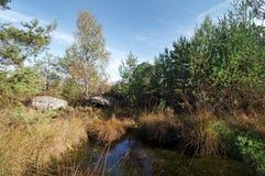 Пруд sangliers конематки вспомогательный в лесе Фонтенбло стоковое изображение