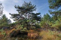 Пруд sangliers конематки вспомогательный в лесе Фонтенбло стоковое фото rf