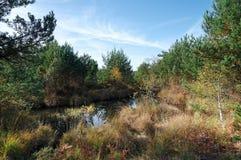 Пруд sangliers конематки вспомогательный в лесе Фонтенбло стоковая фотография rf