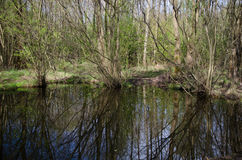 Пруд в лесе Стоковая Фотография RF