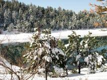 Пруд в зиме стоковые фото