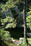 Пруд леса сосенки Стоковое Изображение