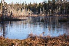 Пруд леса с льдом Стоковое Изображение RF
