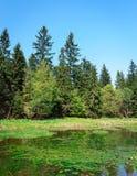 Пруд леса Стоковые Изображения RF