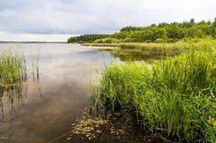 Пруд лета с вегетацией и тросточкой стоковые изображения rf