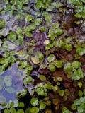 Пруд деланный пи-пи через воду Стоковое фото RF