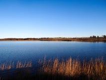 Пруд заболоченного места с голубым небом и травами Стоковые Изображения