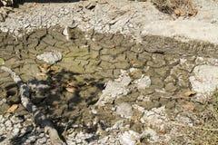 Пруд засыхания русла реки Стоковое Изображение RF