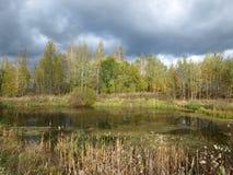 Пруд и лес на центральной части России Стоковые Фото