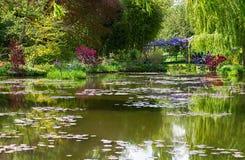 Пруд лилии воды на весеннем времени Стоковые Фотографии RF