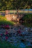 Пруд лилии воды outdoors в саде моста Тобаго карибском Стоковое Фото