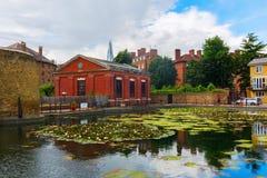 Пруд лилии в Лондоне, Великобритании Стоковое Изображение