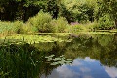 Пруд лилии окруженный сочными заводами Стоковое Фото