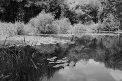 Пруд лилии окруженный сочными заводами Стоковые Фото