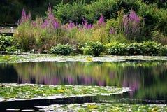 Пруд лилии!!! стоковые изображения rf