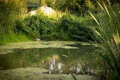пруд малый Стоковая Фотография