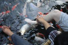 Пруд ног рыб Koi стоковое изображение rf