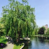 Пруд общего и лягушки Бостона Стоковые Фото