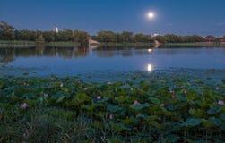 пруд лотоса на ноче Стоковые Фотографии RF