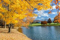 Пруд парка солнечного ландшафта осени окружающий Стоковое Фото