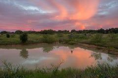 Пруд ранчо Стоковая Фотография RF