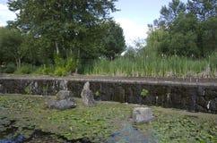 Пруд сада Стоковое Фото
