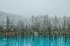 Пруд сини Biei Стоковые Фотографии RF